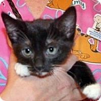Adopt A Pet :: Vixen - Wildomar, CA