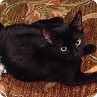 Adopt A Pet :: Simba - Houston, TX