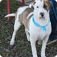 Adopt A Pet :: Stryker - Foster, RI