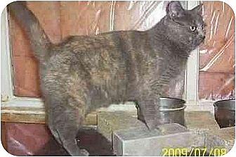 Domestic Shorthair Cat for adoption in Nepean, Ontario - MEREETA