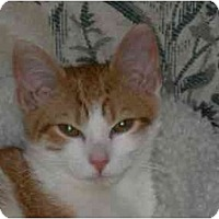 Adopt A Pet :: Hoody (NW) - Little Falls, NJ