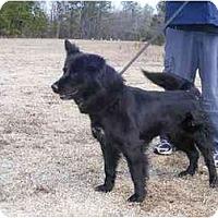Adopt A Pet :: Lucille - Alexandria, VA