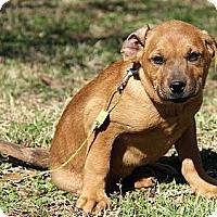 Adopt A Pet :: Conor - Staunton, VA