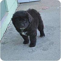 Adopt A Pet :: Knight - New Boston, NH