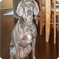 Adopt A Pet :: Zoe - Eustis, FL