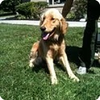 Adopt A Pet :: Sunny - Foster, RI