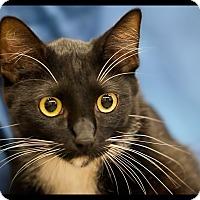 Adopt A Pet :: Alfie - Wickenburg, AZ