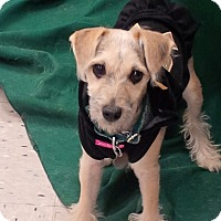Adopt A Pet :: Marion - Chicago, IL