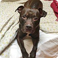 Adopt A Pet :: Rex - Brooklyn, NY
