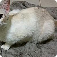 Adopt A Pet :: Tamsin - McDonough, GA