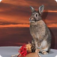 Adopt A Pet :: Ruth - Marietta, GA