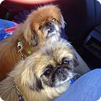 Adopt A Pet :: Joe Joe and Sue Sue **ADOPTION PENDING** - Kenmore, NY
