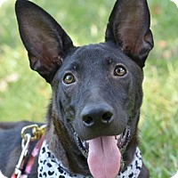 Adopt A Pet :: Haily - San Francisco, CA