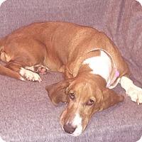 Adopt A Pet :: Lucy - Charleston, SC