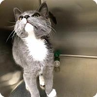 Adopt A Pet :: Wolverine - McDonough, GA
