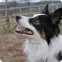Adopt A Pet :: Gryphon - Lebanon, CT