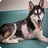 Adopt A Pet :: DAGWOOD - Palmer, AK