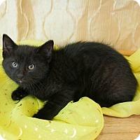 Adopt A Pet :: Yooper ( BARN NEEDED) - Muskegon, MI