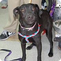 Adopt A Pet :: SweetPea - Brooklyn, NY
