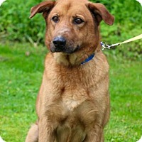 Adopt A Pet :: Leo - Chester Springs, PA
