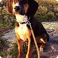 Adopt A Pet :: Lincoln - E. Greenwhich, RI