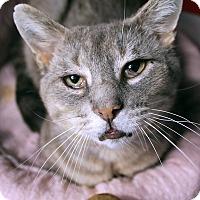Adopt A Pet :: Godwit - Chicago, IL