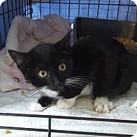 Adopt A Pet :: Cassie - Roscoe, NY