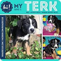 Adopt A Pet :: Terk - New Port Richey, FL