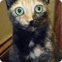 Adopt A Pet :: Patches - Colfax, IA