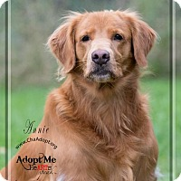 Adopt A Pet :: Annie - Ashland, WI