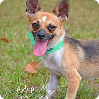 Adopt A Pet :: Rebel - Fort Valley, GA