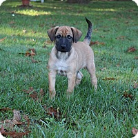 Adopt A Pet :: Evan - New Oxford, PA