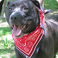 Adopt A Pet :: Shadow - Voorhees, NJ