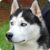 Adopt A Pet :: Balto - Nashville, IN