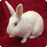 Adopt A Pet :: STU - Urbana, IL