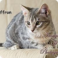 Adopt A Pet :: Saffron - Oklahoma City, OK