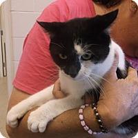 Adopt A Pet :: BANDIT - Gloucester, VA