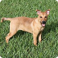 Adopt A Pet :: BRIE - Wellington, FL