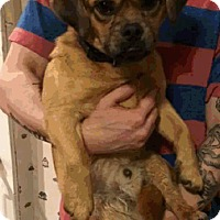 Adopt A Pet :: Oscar - Chesterfield, VA