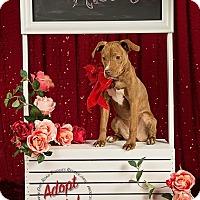 Adopt A Pet :: Penny - Gillsville, GA