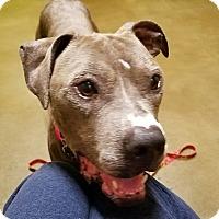 Adopt A Pet :: Fernando - Los Angeles, CA