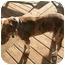 Photo 4 - American Bulldog Dog for adoption in Graham, Washington - Boone