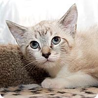 Adopt A Pet :: Brooklyn - Irvine, CA