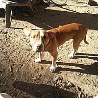 Adopt A Pet :: Ruben - New orleans, LA