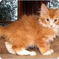 Adopt A Pet :: Salsa - Davis, CA