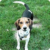 Adopt A Pet :: Jack - Novi, MI