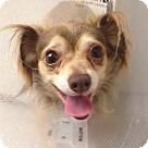 Adopt A Pet :: Jules