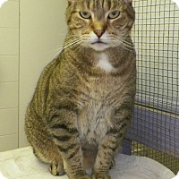 Adopt A Pet :: George - Dover, OH