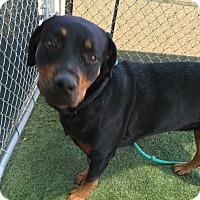 Adopt A Pet :: Farley - Gilbert, AZ