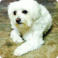 Adopt A Pet :: Queen Daisy - Bedminster, NJ
